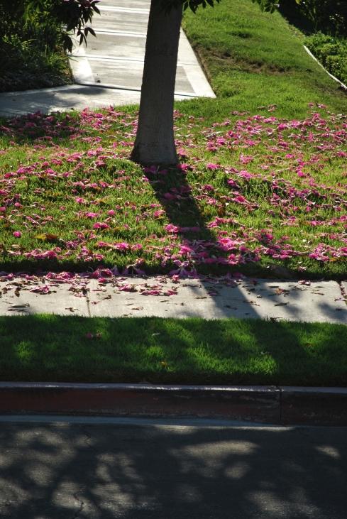 flowertreestreet2