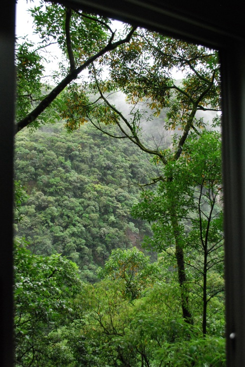 The view from the train window into the Mata Atlantica Rain Forest at Serra do Mar, Paran, Brazil